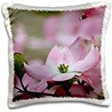 Bluela PS Flowers - Angelic Pink Spring Dogwood Flower - Trees - Floral Photography - 16x16 inch Pillow Case