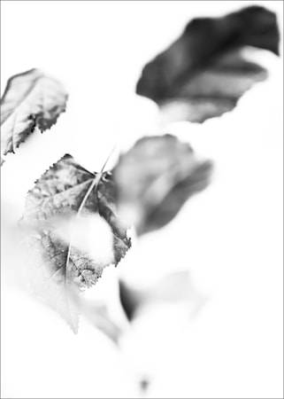 Details by M Turning leaf poster - 50x70
