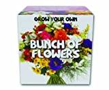 Gift Republic Ltd Gift Republic GR330019 Grow Your Own Bunch of Flowers