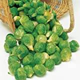 Suttons Seeds 153422 Bedford Fillbasket Brussels Sprouts Seed