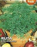Premier Seeds Direct AL pack Sgaravatti RUTA Erba aromatica  (Pack of 134)