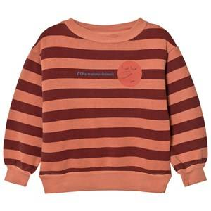 The Animals Observatory Unisex Jumpers and knitwear Orange Bear Sweatshirt Deep Orange Stripes