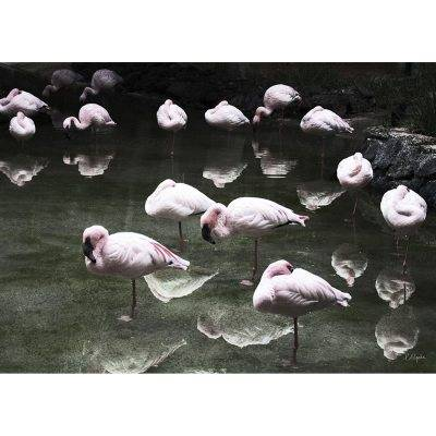 House Of Beatniks Flamingos juliste, 50x70