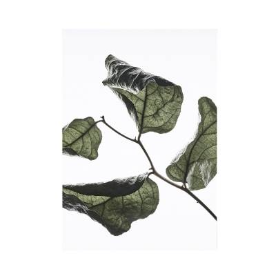Paper Collective Juliste Floating Leaves 03, A5