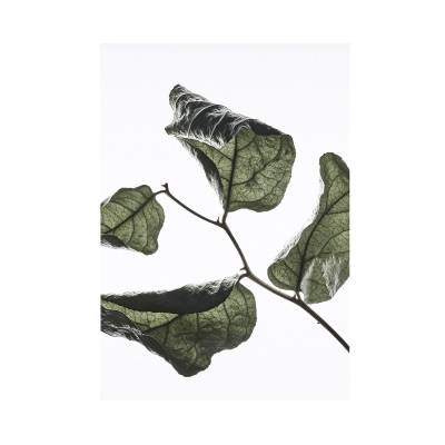 Paper Collective Juliste Floating Leaves 03, A3