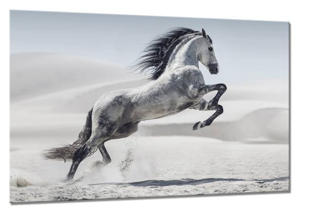 Estancia - Dropship Canvastaulu Horse 75x100 cm