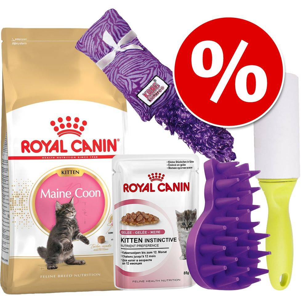 Royal Canin Breed Royal Canin Maine Coon Kitten -paketti - 16-osainen