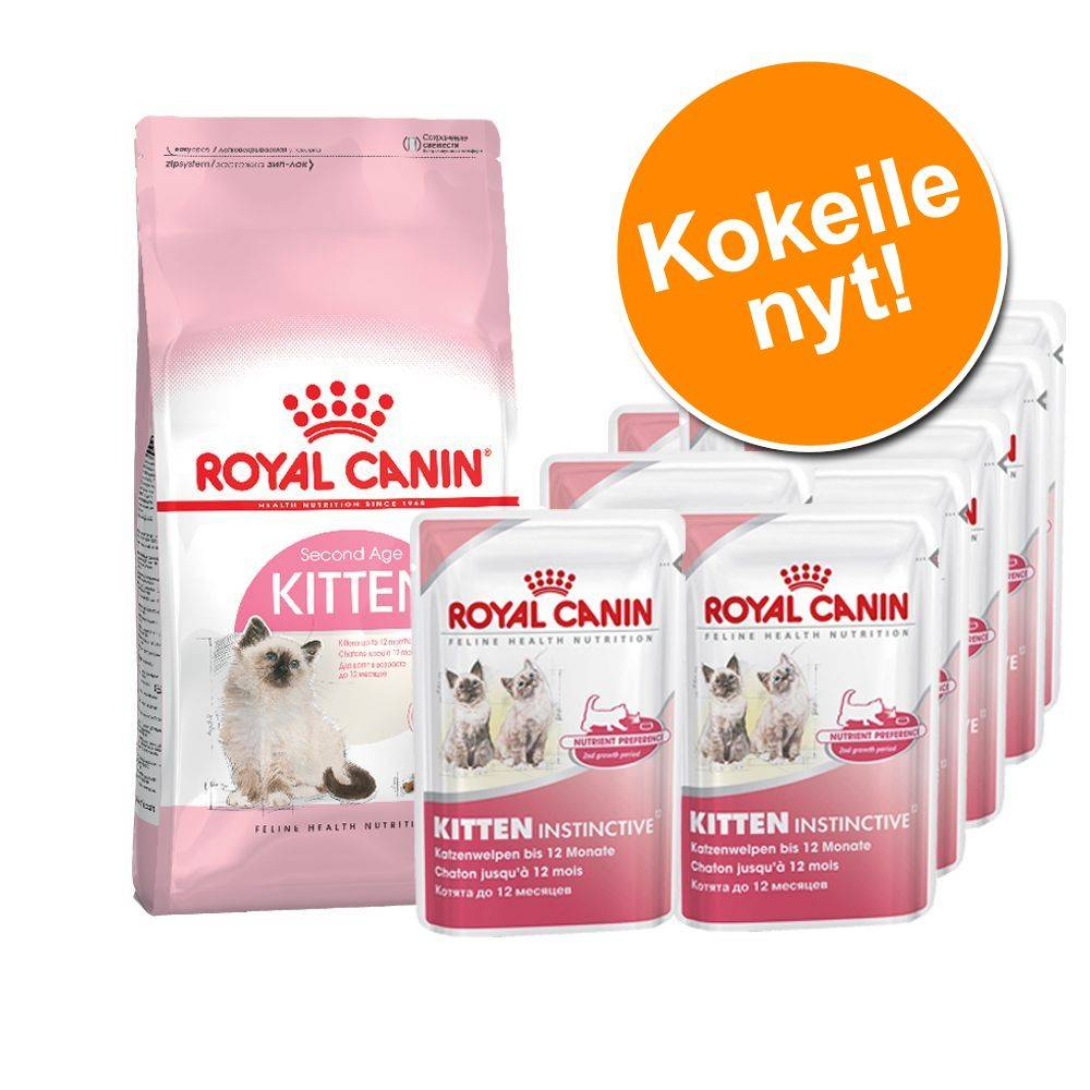 Royal Canin Breed 400 g Royal Canin Kitten -kuivaruokaa + 12 x 85 g Kitten Instinctive - Maine Coon Kitten + Instinctive in Jelly