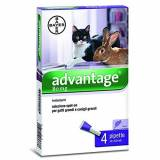Bayer Advantage Spot On 80 GATTO + CONIGLIO (4 pipette per pulci) 4 x 0,8 ml
