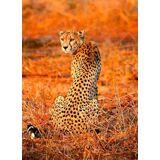 Idealdecor Fototapete »Leopard Safari«, Vlies, 2 Bahnen, 183 x 254 cm, bunt