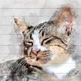 queence Holzbild »Verwaschene Katze«, 40x40 cm Echtholz, bunt