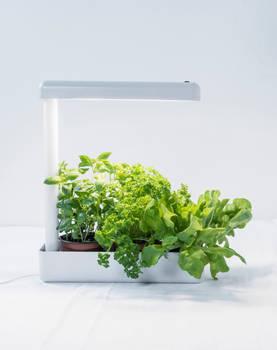 Airam Kasvivalaisin Herby LED 12 W Airam