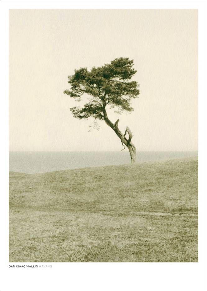 Dan Isaac Wallin Haväng-juliste 70x100 cm