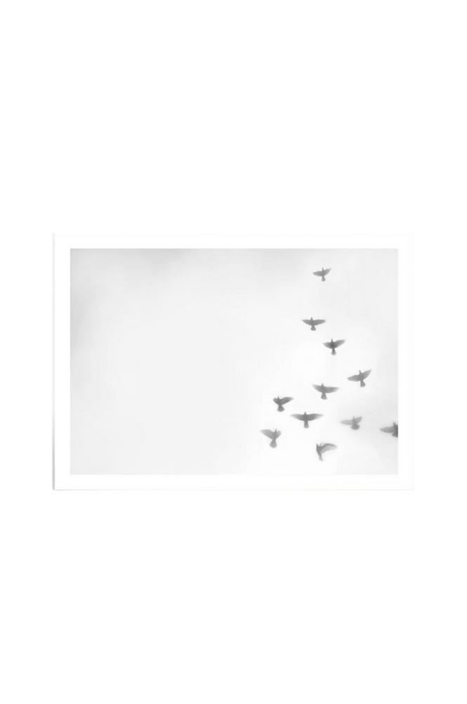 Kortkartellet Copenhagen Doves juliste 50x70 cm
