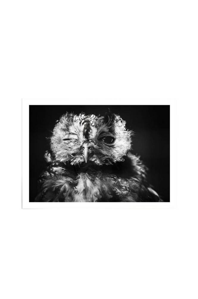 Kortkartellet One Eye -juliste 50x70 cm
