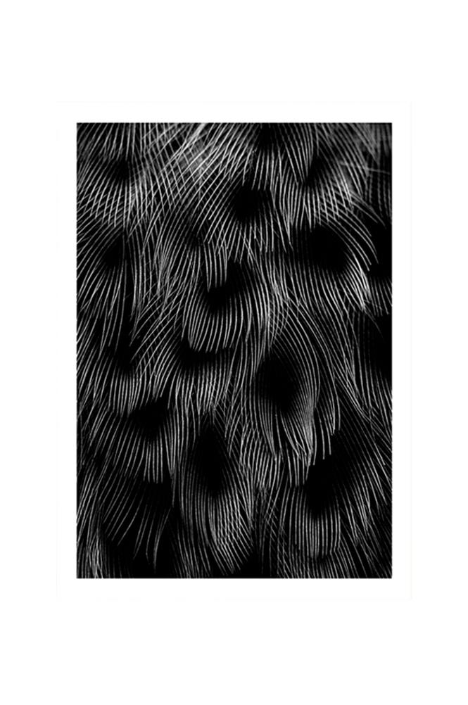 Kortkartellet Black Feathers -juliste 50 x 70