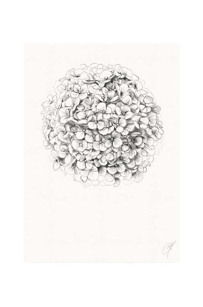Kortkartellet Hydrangea juliste 50 x 70