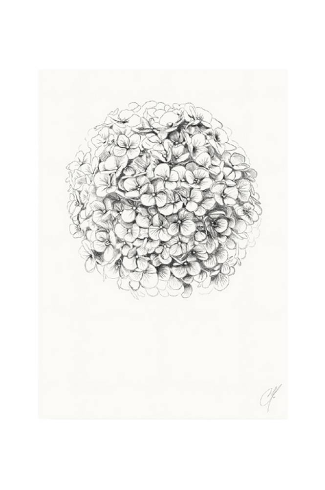 Kortkartellet Hydrangea-juliste 50 x 70