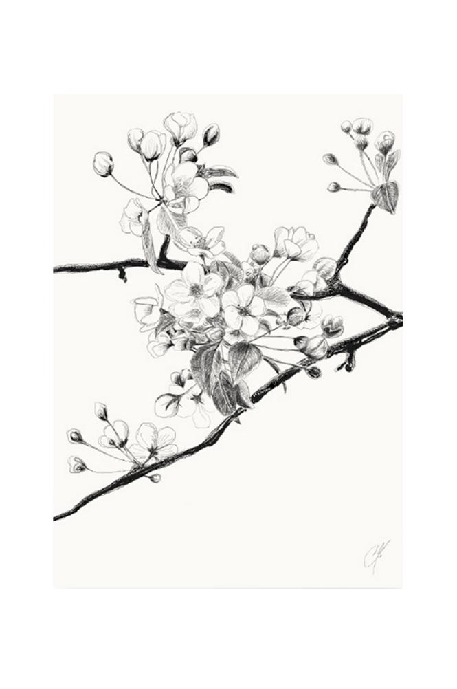 Kortkartellet Cherry-juliste 50 x 70