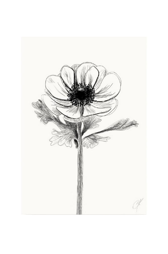 Kortkartellet Anemone juliste 50 x 70