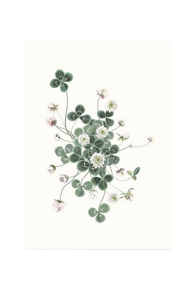 Kortkartellet Lucky Clover -juliste 50 x 70