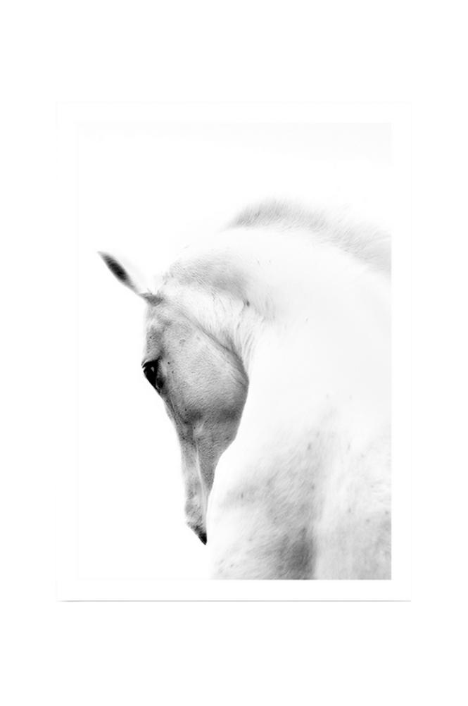 Kortkartellet White Horse 50 x 70 -juliste