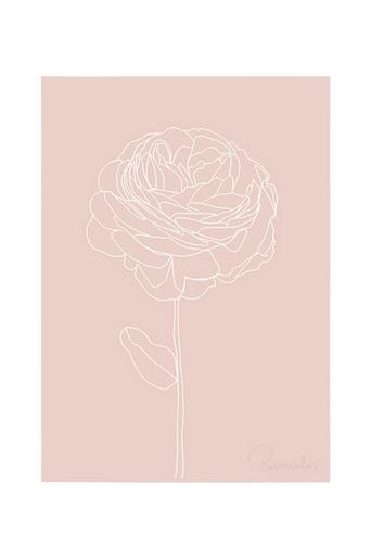 Kortkartellet Juliste Ranunculus  - White Line