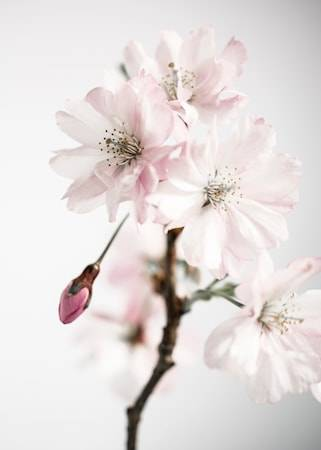 Details by M Ancient blossom no.3 poster – 50x70