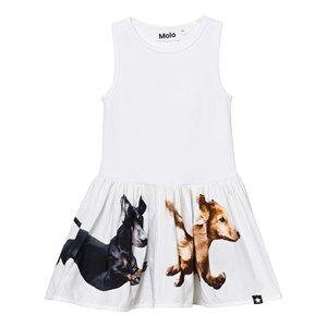 Molo Girls Dresses White Cordelia Dress White
