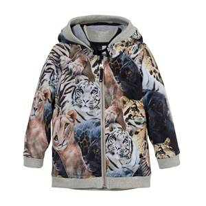 Image of Molo Unisex Coats and jackets Brown High Soft Shell Jacket Wild Cats