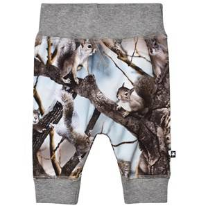 Molo Boys Bottoms Blue Sammy Soft Pants Squirrels