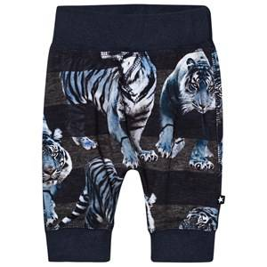 Molo Boys Bottoms Blue Sammy Soft Pants Blue Tigers