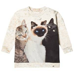 Popupshop Unisex Jumpers and knitwear Beige Cats Lecce Sweatshirt