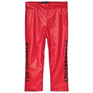 The Animals Observatory Chicken Pants Red Apple Black The Animals 6 Years