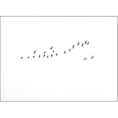 Jollygoodfellow Birds Migration juliste