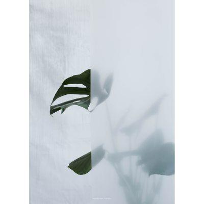 Kristina Dam Split Leaf I juliste, 50x70