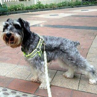 e-ville.com Koiran talutushihna ja valjaat heijastimilla - L, Musta