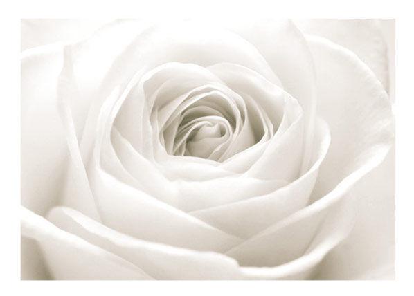 Bilder-Welten Kuvatapetti THE WHITE ROSE 400x280 cm