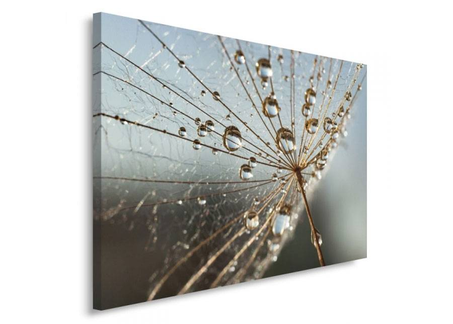 Image of Seinätaulu Drops of dew on the plant 80x120 cm