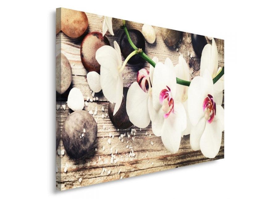 Seinätaulu Orchid 70x100 cm