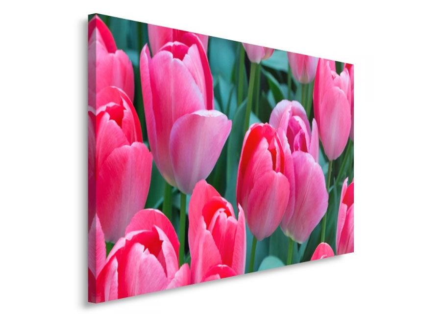 SeinätauluPink tulips 70x100 cm