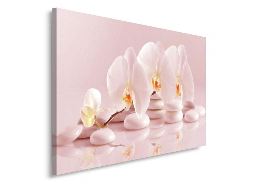 Image of Seinätaulu Orchid 80x120 cm