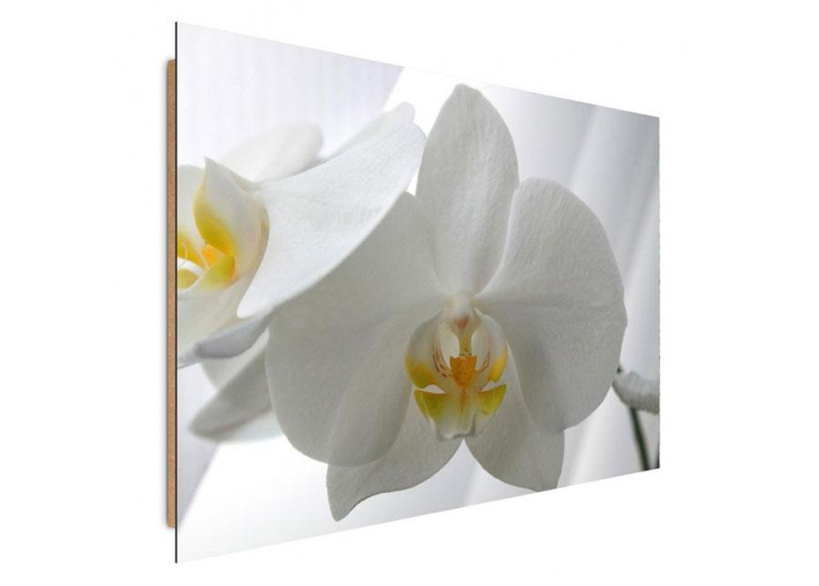 Seinätaulu White orchids 70x100 cm
