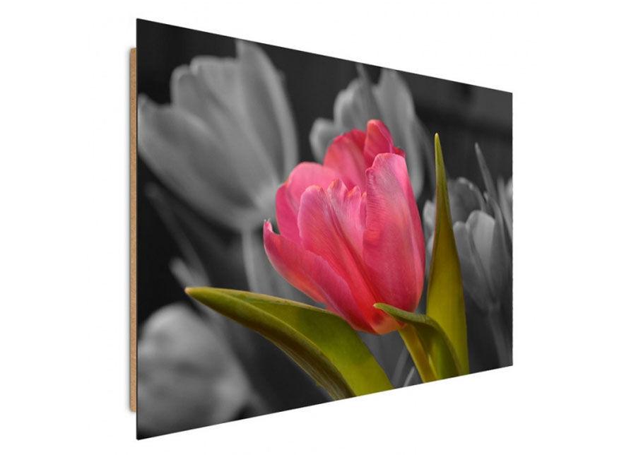 Seinätaulu Red tulip 70x100 cm