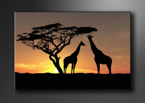 Visario Seinätaulu AFRIKKA 60x80 cm