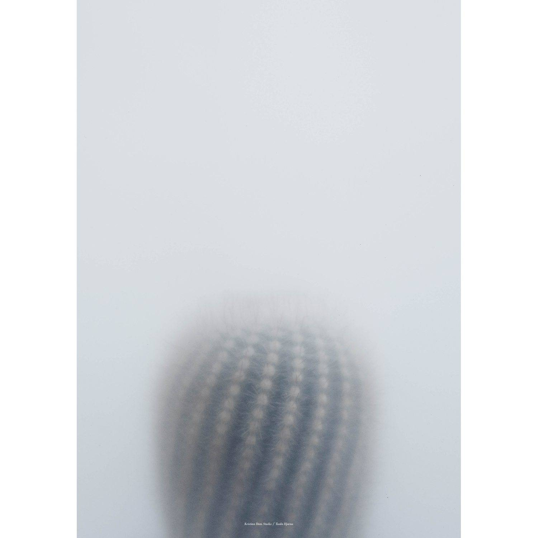 Kristina Dam Ball Cactus I juliste, 50x70