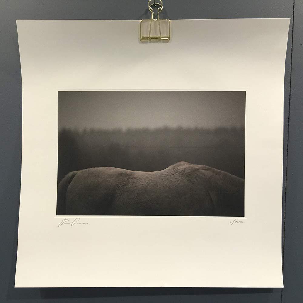 Kajsa Cramer White Horse Juliste, 45x45cm