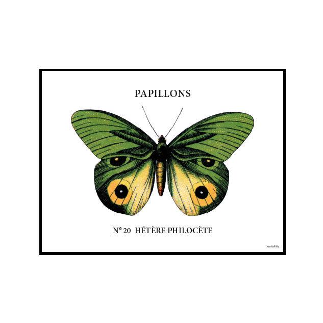 Vanilla Fly Juliste Papillion & Kehyksellä 20x25cm