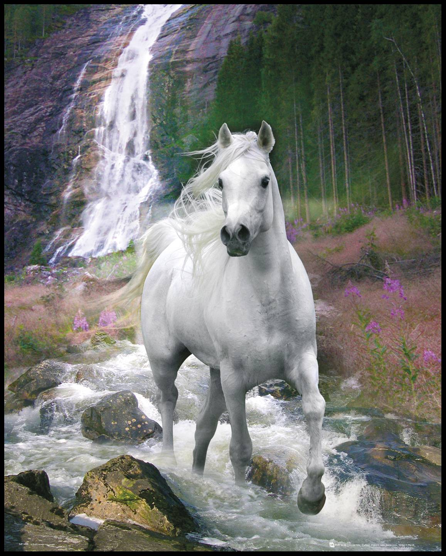 By Agus Horse Waterfall - 40x50 cm
