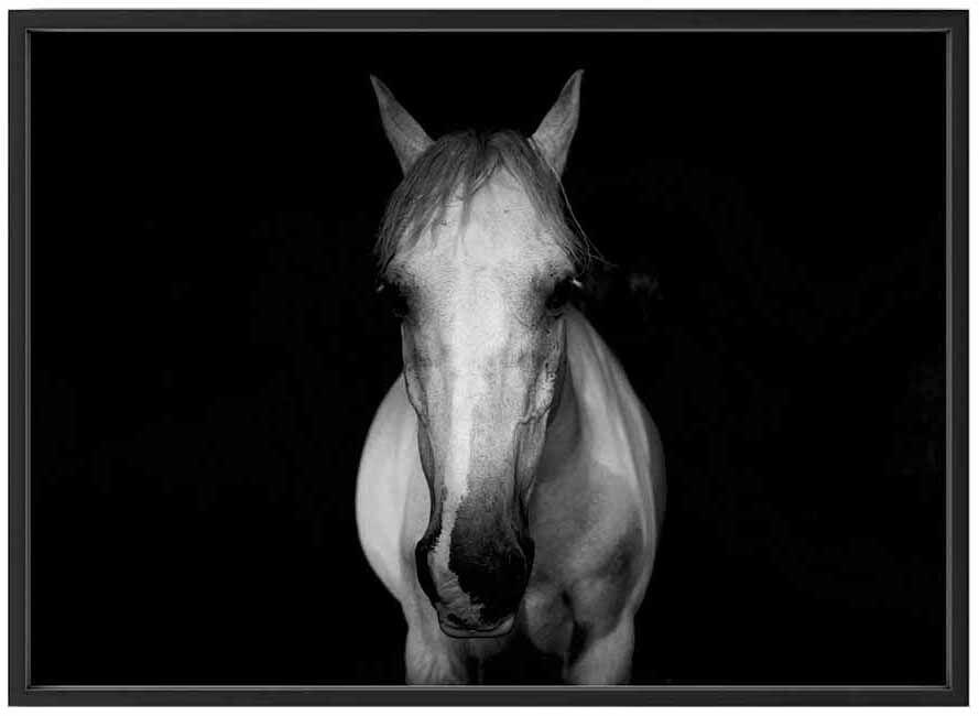 Bildverkstad On a white horse